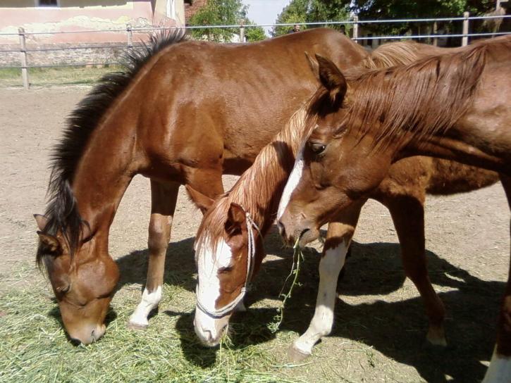 three-horses-725x544