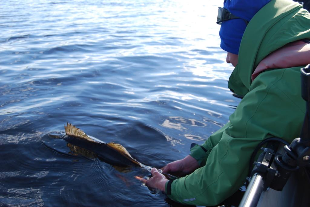 kalan-vapauttaminen1_svk_olli_saari